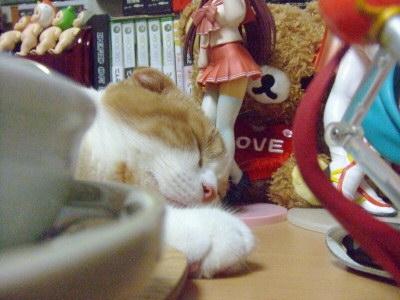 仕事場の机で寝てるもも