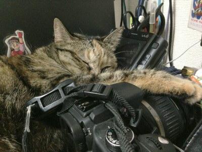 TypeU枕のみうちゃん