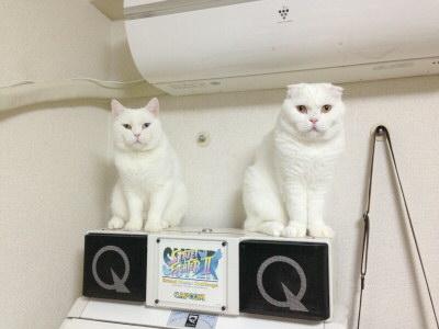 Qサウンド猫