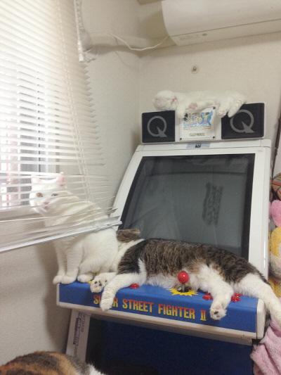 猫タワー筐体2