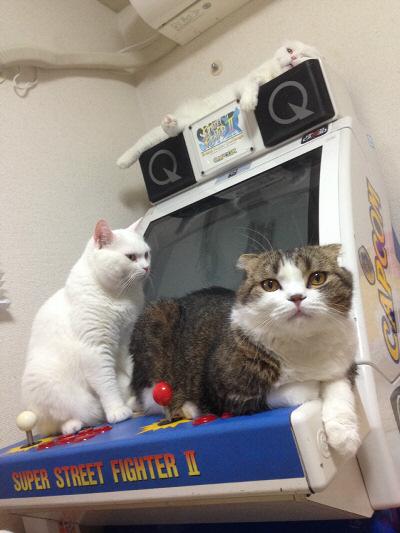 朝の猫タワー筐体