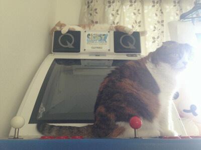 猫タワー筐体